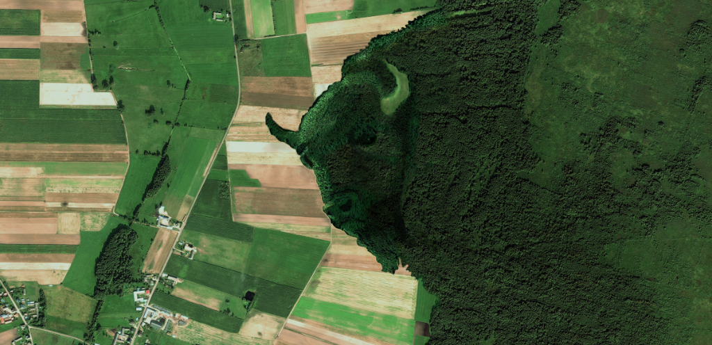 Żubr strażnikiem puszczy. Firma wykupuje tereny w Dolinie Biebrzy i oddaje Biebrzańskiemu Parkowi Narodowemu