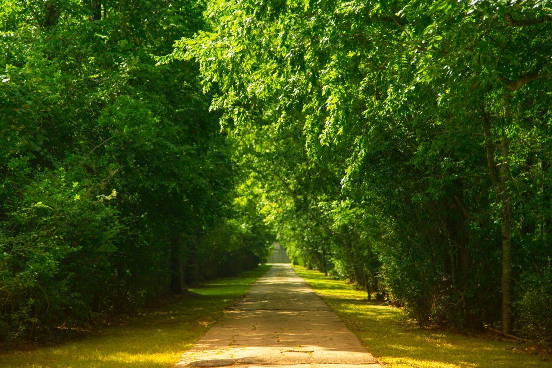 Badania: Warszawskie drzewa generują nawet 1,8 mln zł rocznie